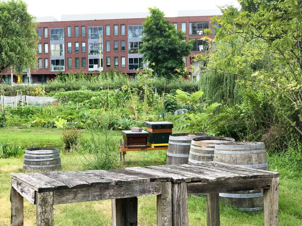 Haagse Stadswijngaard