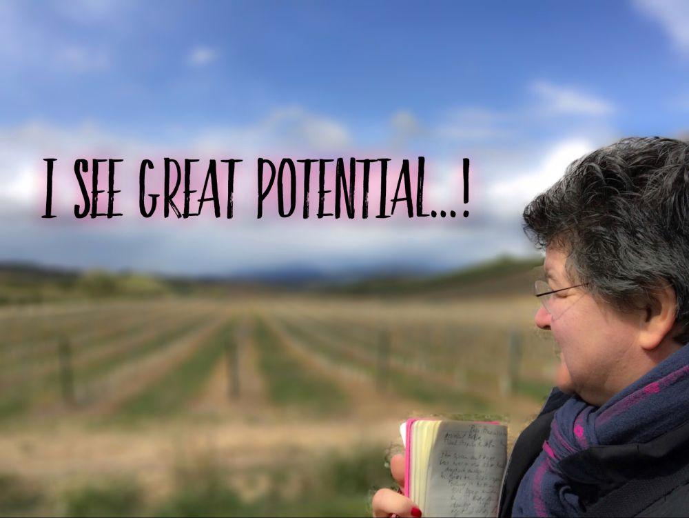 Navarra - I see great potential