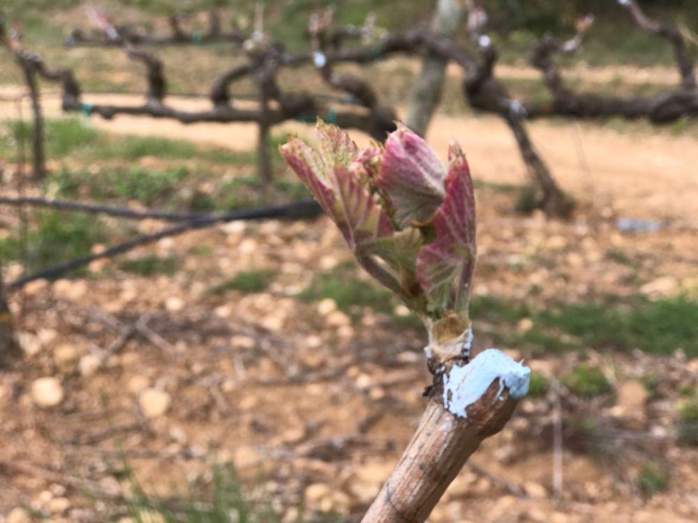 voorjaar bij Pago de Larrainzar