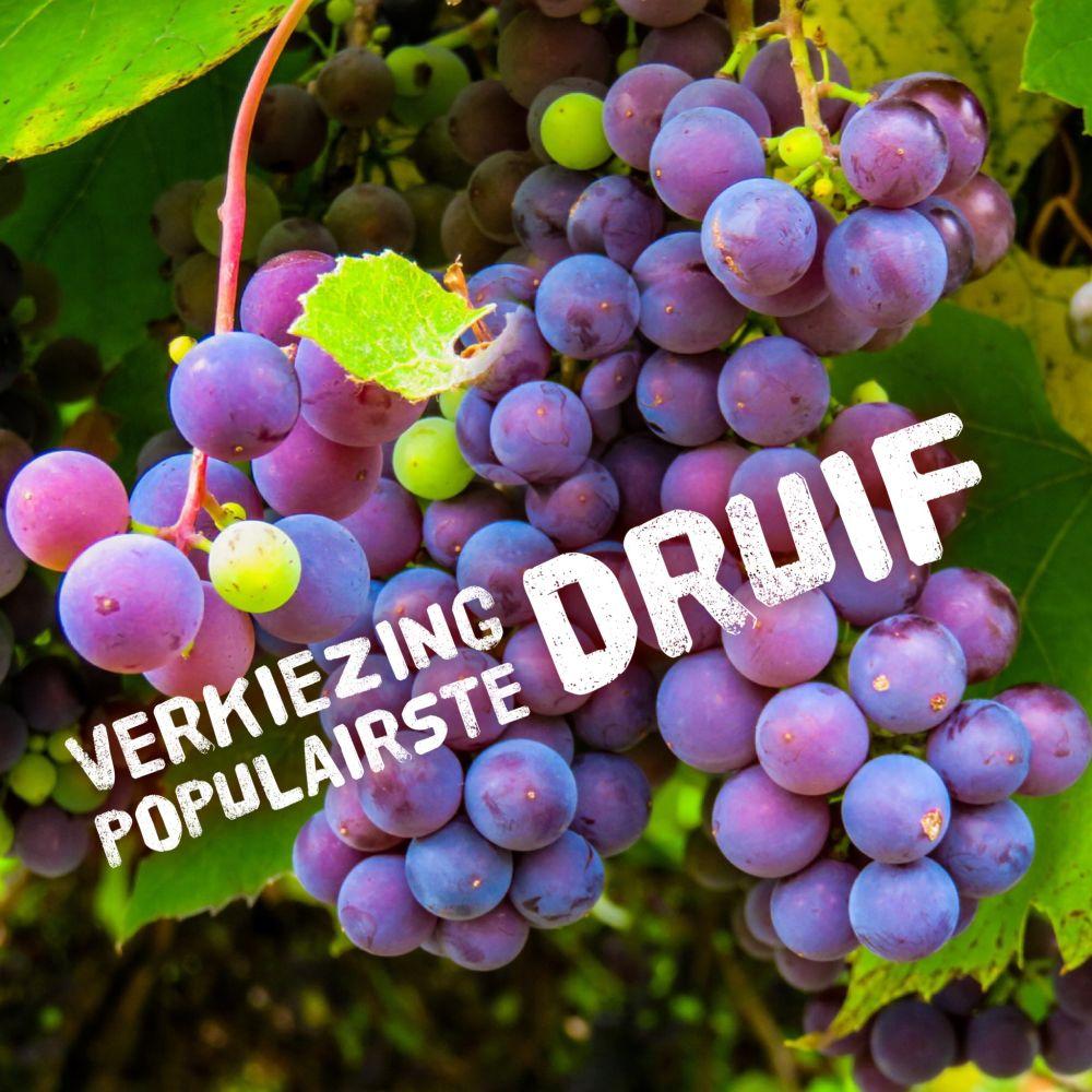 Verkiezing populairste druif