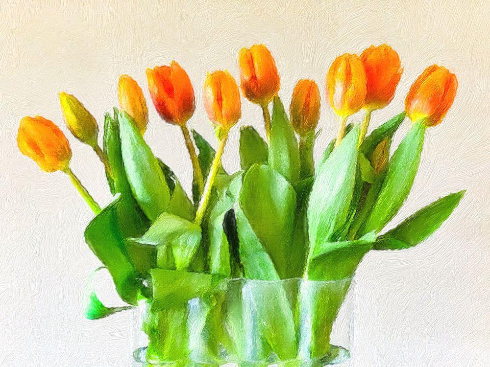 oranje tulpen van de wijkvereniging